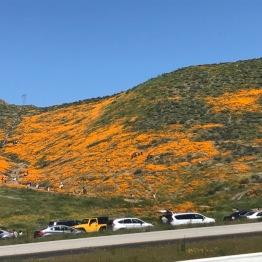 Primavera en Temecula, CA